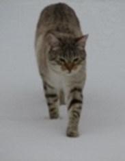 Wild (sometimes) cat in Scotland