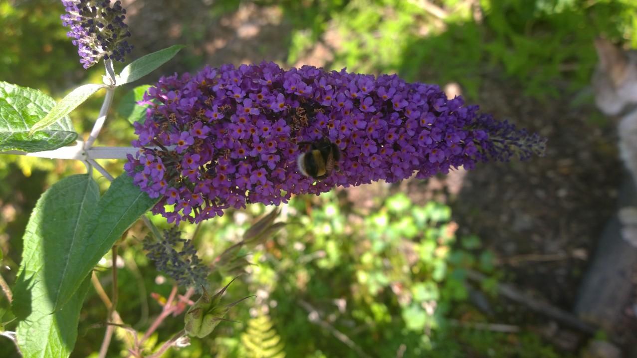 Donich Website Midsummer Flowers