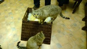 catswithhamper